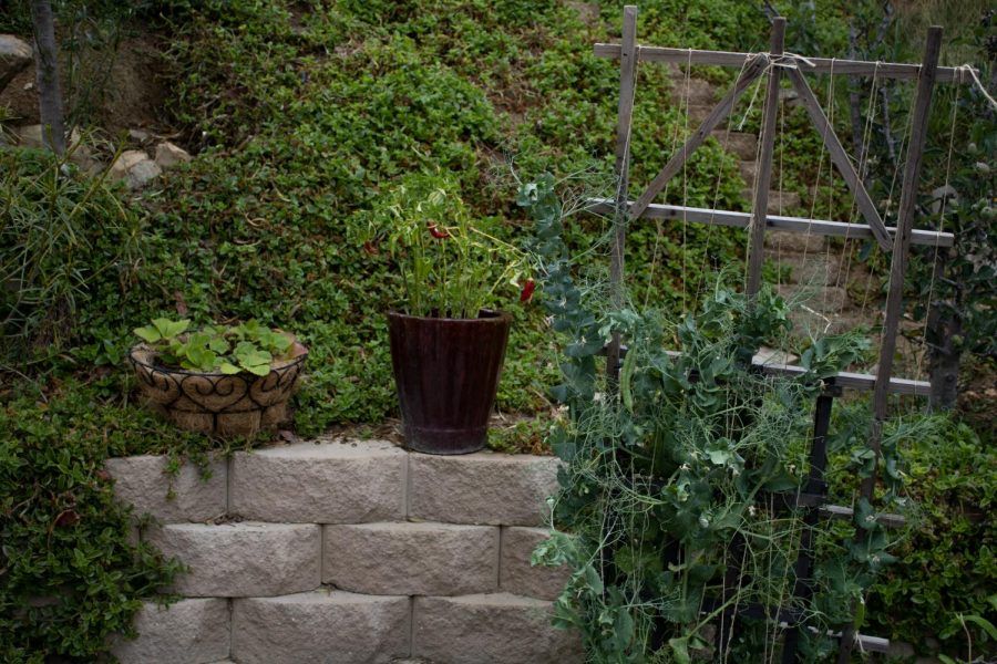 How to Start Your own Home Garden
